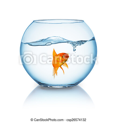 lonely goldfish in a fishbowl  - csp26574132