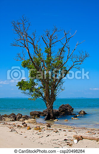 Lonely, old tree on the beach in Thailand - csp20498284