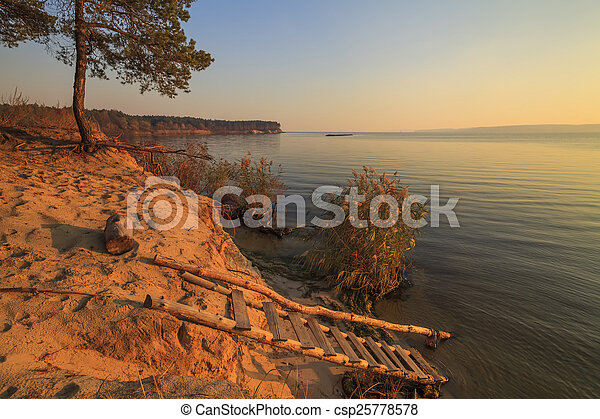 Lonely pine tree on the shore of a huge lake - csp25778578