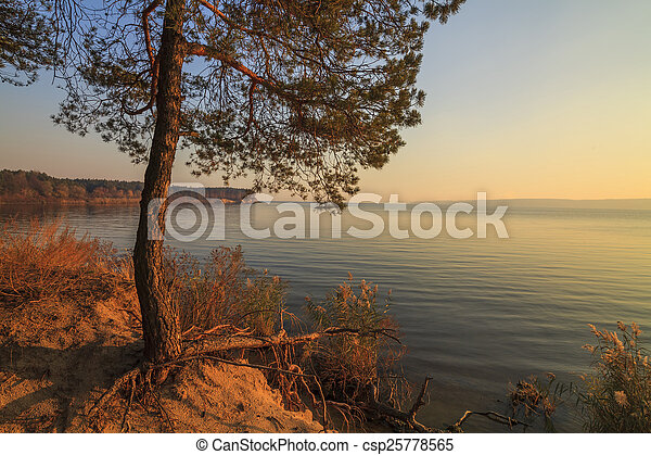 Lonely pine tree on the shore of a huge lake - csp25778565