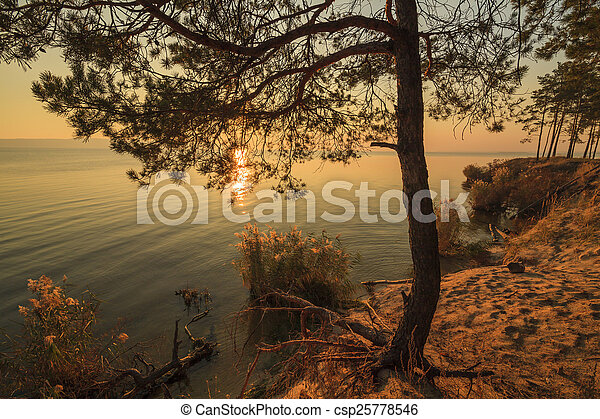 Lonely pine tree on the shore of a huge lake - csp25778546