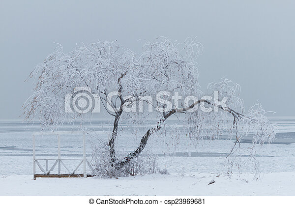 Lonely tree in winter - csp23969681