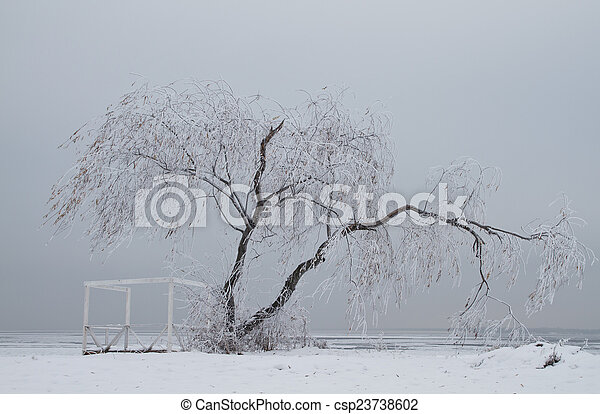 Lonely tree in winter - csp23738602