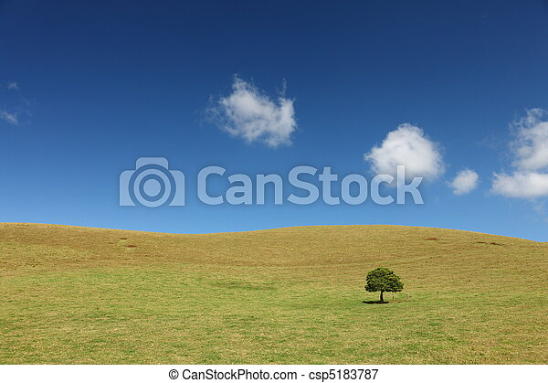 Lonely Tree on grassland at Big Island, Hawaii - csp5183787