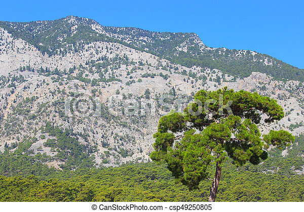 Lonely tree on the background of the mountains. Composition of nature. - csp49250805
