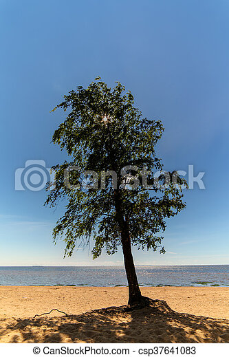 lonely tree on the beach - csp37641083