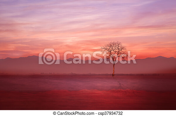 Lonely tree on the ground with evening mist - csp37934732
