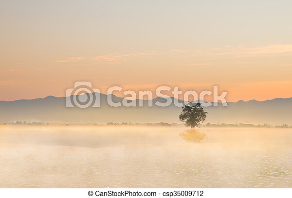 Lonely tree on the ground with morning mist - csp35009712