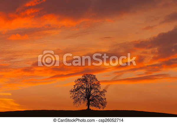 Lonely tree on the hill at sunrise - csp26052714