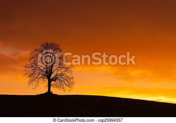 Lonely tree on the hill at sunrise - csp25994357