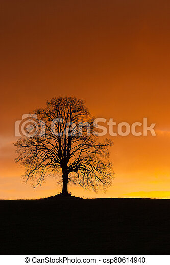 Lonely tree on the hill at sunrise - csp80614940