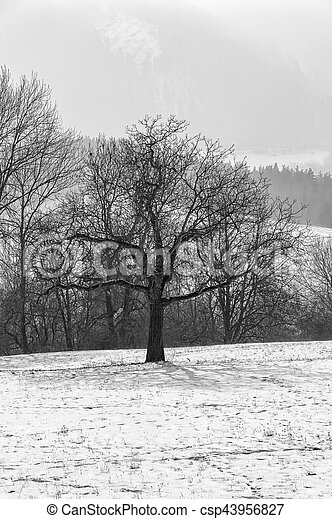 Lonely tree on the lawn in winter - csp43956827