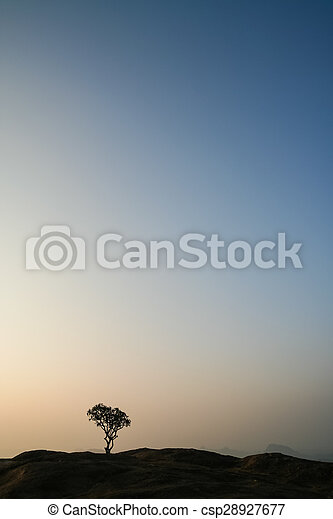 Lonely tree on top of the hill at sunrise - csp28927677