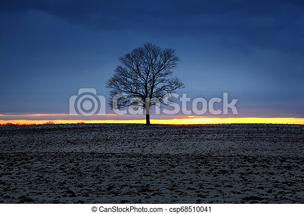 Lonely tree silhouette at sunset light at winter season - csp68510041