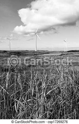 long grass and bogland with wind turbines in black and white - csp17269276