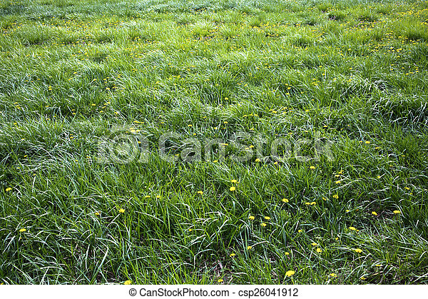long grass meadow with yellow flowers - csp26041912