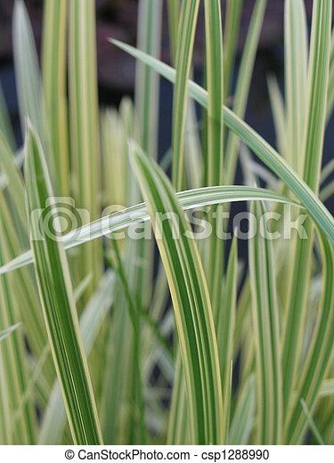 long green grass, reeds - csp1288990