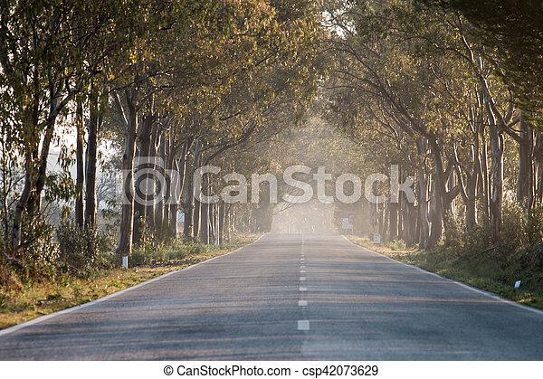 Long straight road - csp42073629