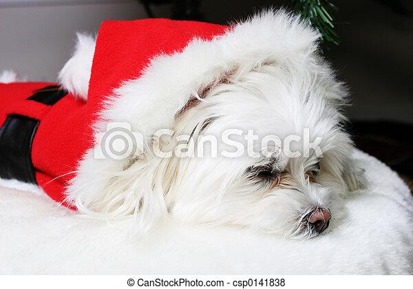 Long winters nap - csp0141838