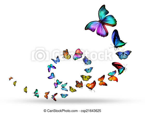 Loop of many different butterflies - csp21643625