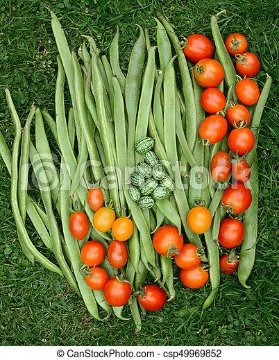 loper, cucamelons, bonen, fris, groene, tomaten - csp49969852