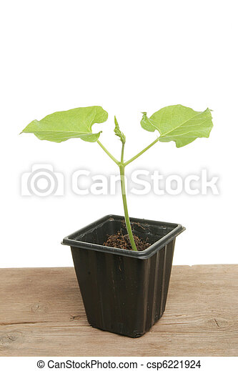 loper, plant, boon, jonge - csp6221924