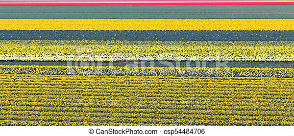 Lot of flowers in Netherlands - csp54484706