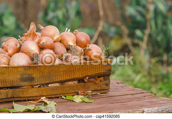 Lot of onions in crate. - csp41592085