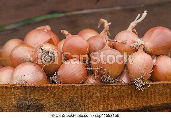 Lot of onions in crate. - csp41592156