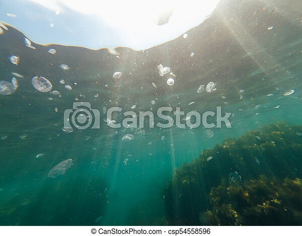 lots of dangerous jellyfish under blue water of the sea - csp54558596