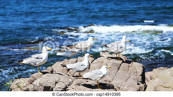 lots of seagulls sitting on a rock - csp14910395