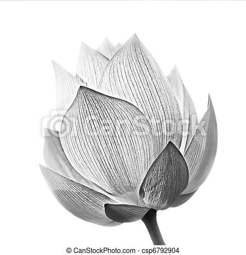lotus bloem - csp6792904