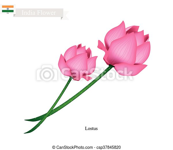 lotus blossom the national flower of india india flower water