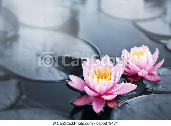 Lotus blossoms - csp5879471