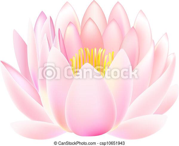 Lotus  - csp10651943