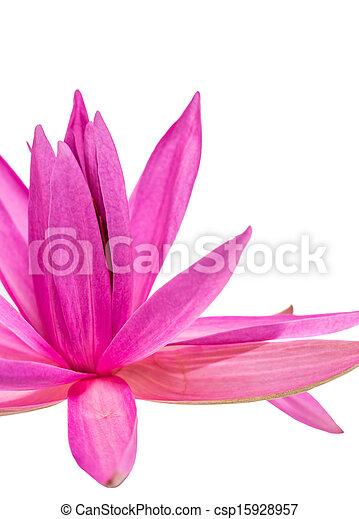 Lotus flower abstract lotus flower abstract over white background lotus flower abstract csp15928957 mightylinksfo
