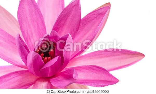 Lotus flower abstract lotus flower abstract over white background lotus flower abstract csp15929000 mightylinksfo