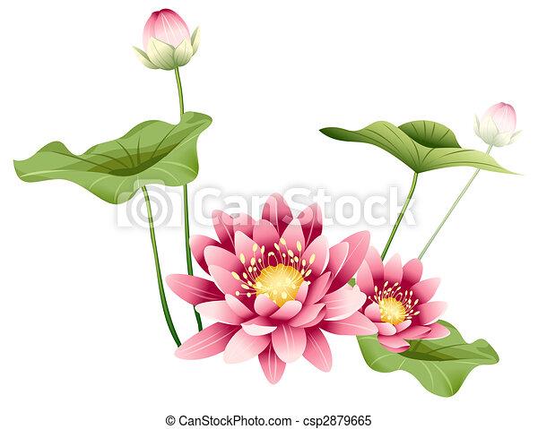Lotus Flower And Leaves Illustration Drawing Of Purple Lotus Flower