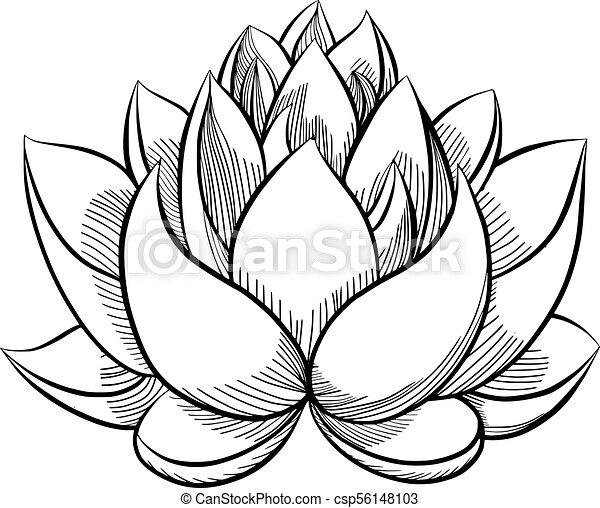 Lotus Flower Bloom Lotus Flower Bloomed Buds And Leaves Hand
