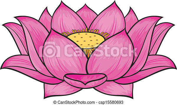 Lotus flower - csp15580693