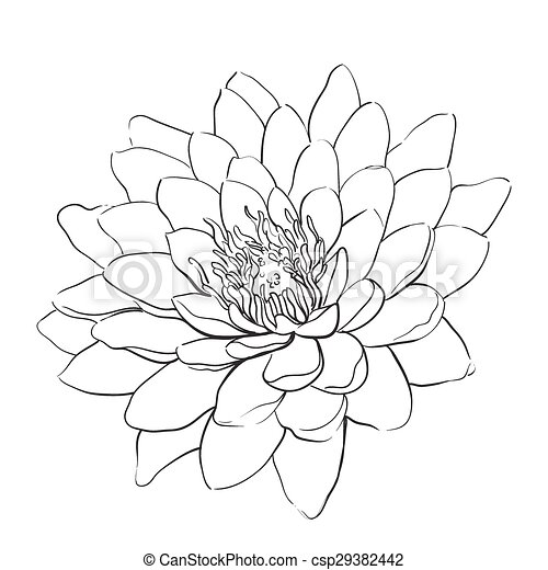 Outline lotus flower on white background lotus flower csp29382442 mightylinksfo