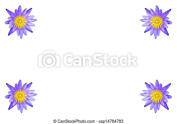lotus flower isolated - csp14784783
