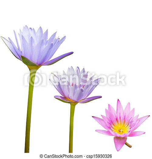 Lotus Flower Isolated - csp15930326
