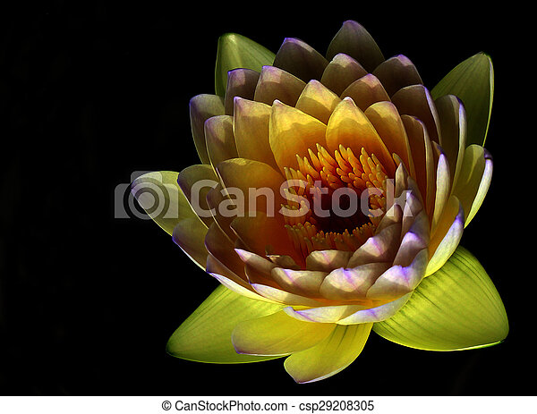 Lotus flower isolated - csp29208305