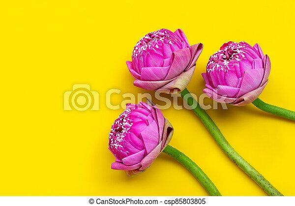 Lotus flower on yellow background. - csp85803805