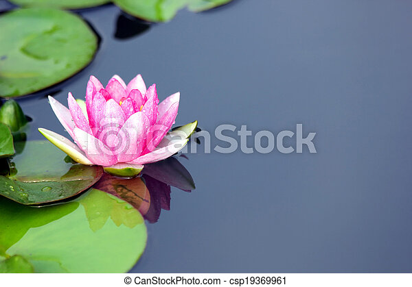 lotus flower - csp19369961
