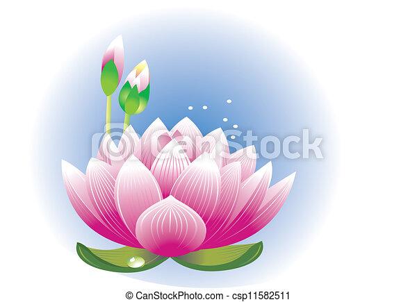 Lotus flower - csp11582511