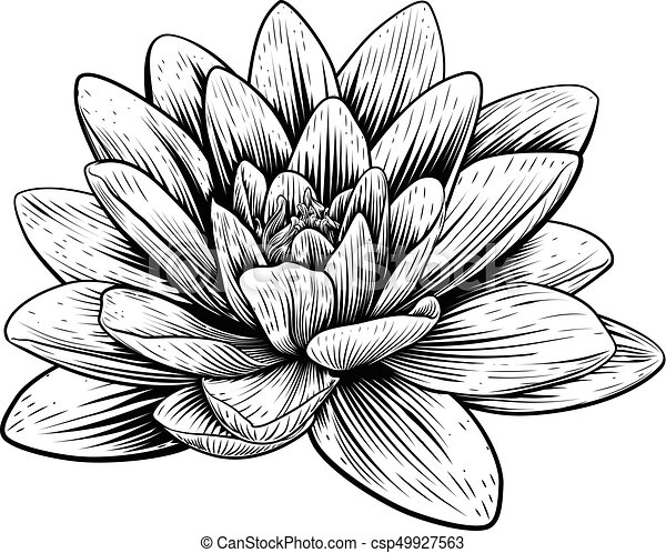 lotus flower water lily vintage woodcut etching a lotus lily water rh canstockphoto com water lily clip art free water lily clipart black and white