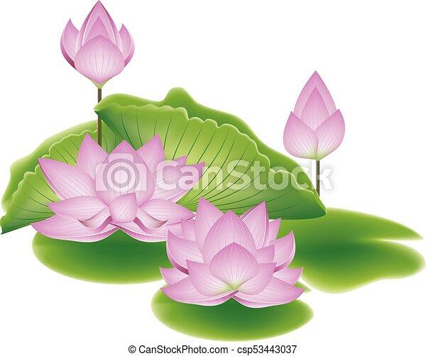 Lotus Flower With Leaves Blooming Pink Lotus Flowers With Big Green