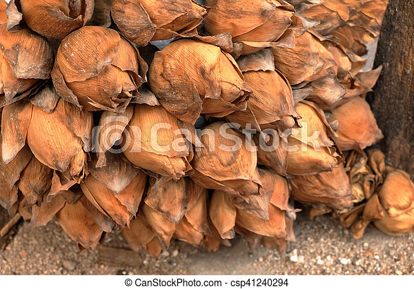 Lotus Flowers Pray For Buddha A Close Up Dried Lotus Withered